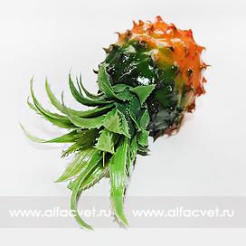 ананас цвета зеленый с коричневым 57