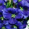 искусственные цветы анютины глазки цвета синий 12