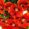 искусственные цветы анютины глазки цвета красный 4