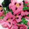 искусственные цветы анютины глазки цвета розовый 5