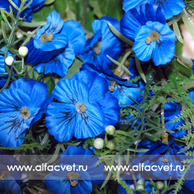 анютины глазки цвета синий 12
