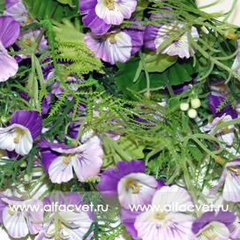 анютины глазки цвета фиолетовый с белым 15