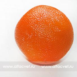 апельсин цвета оранжевый 2
