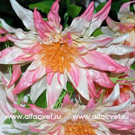 астры с папоротником цвета розовый с белым 14