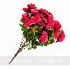 азалия цвета розовый 5
