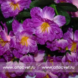 азалия цвета фиолетовый 7