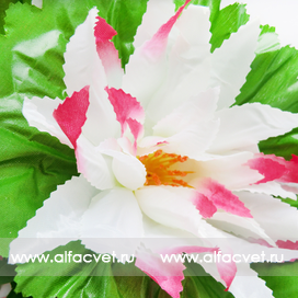 букет кувшинок цвета белый с розовым 19