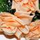 букет роз цвета чайный 3