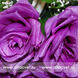 букет роз цвета фиолетовый 7