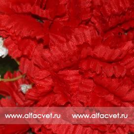 фиалка-гвоздика цвета красный 4