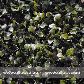 газон брусничный цвета зеленый 59