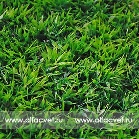 газон мох цвета зеленый 59