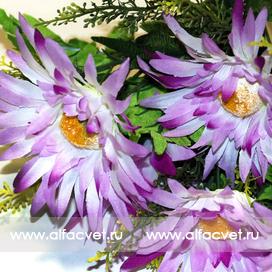герберы цвета фиолетовый с белым 15