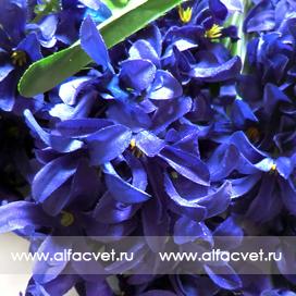 букет гиацинт цвета синий 12