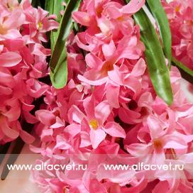 букет гиацинт цвета розовый 5