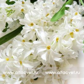 букет гиацинт цвета белый 6