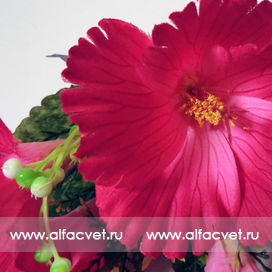 гибискус (китайская роза) цвета малиновый 11