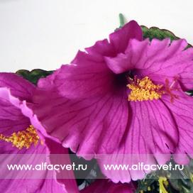 гибискус (китайская роза) цвета фиолетовый 7