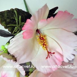 гибискус (китайская роза) цвета светло-розовый 9