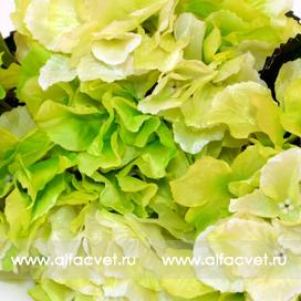 гортензия цвета салатовый 39