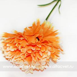 гвоздикa цвета оранжевый 2