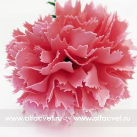 гвоздика пласт цвета розовый 5
