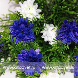 гвоздики цвета синий с белым 41