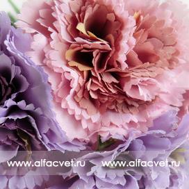 букет гвоздик цвета фиолетовый с сиреневым 50