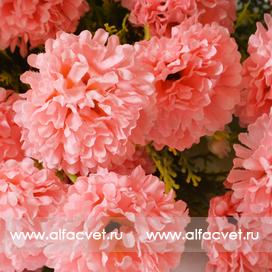 гвоздики цвета розовый 5