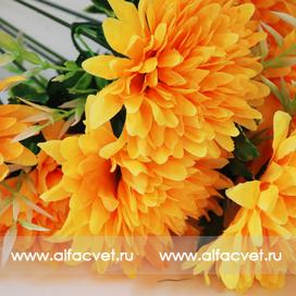 хризантемы цвета светло-оранжевый 25