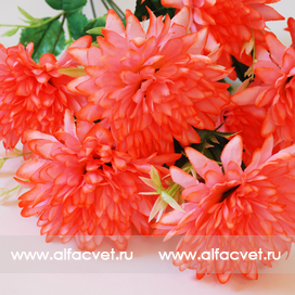 хризантемы цвета светло-розовый 9