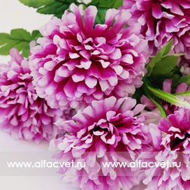 хризантемы цвета фиолетовый с белым 15