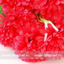 хризантемы цвета красный 4