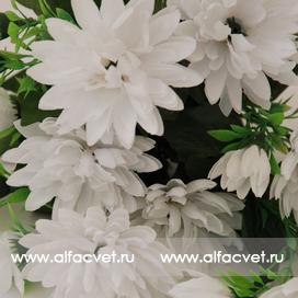 хризантемы цвета белый 6