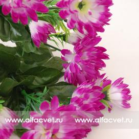 хризантемы цвета фиолетовый 7