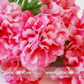 хризантемы цвета розовый с белым 14