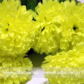 букет хризантем цвета салатовый 39