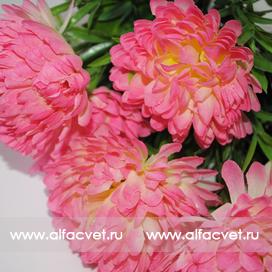 хризантемы цвета розовый 5
