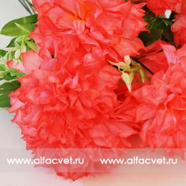 хризантемы цвета темно-розовый 10