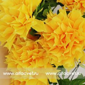 хризантемы цвета темно-желтый 26