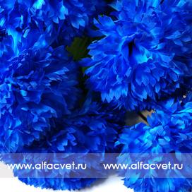хризантемы цвета синий 12