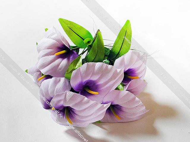 каллы фиолетовые