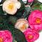 камелия цвета кремовый с розовым 56
