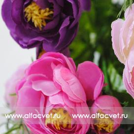 камелия цвета светло-розовый, малиновый, фиолетовый 47