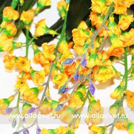лаванда цвета желтый 1