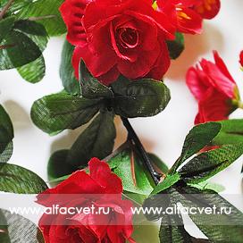 лиана с цветами цвета красный 4