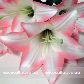 лилии цвета белый с розовым 19