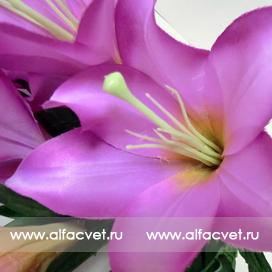 лилии цвета фиолетовый 7