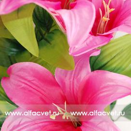 лилии цвета малиновый 11