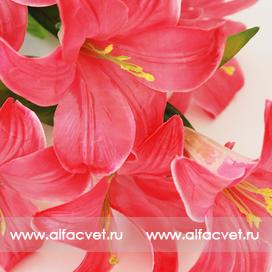 лилии цвета розовый 5